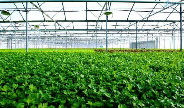Thị trường bán lẻ thực phẩm hữu cơ đang được xem là một xu hướng kinh doanh mới và tăng 20% mỗi năm.
