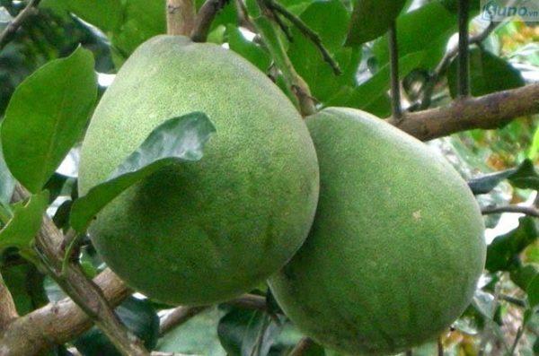 Trái cây chưng Tết