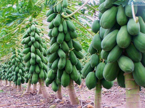 Trái cây chưng Tết đem lại may mắn