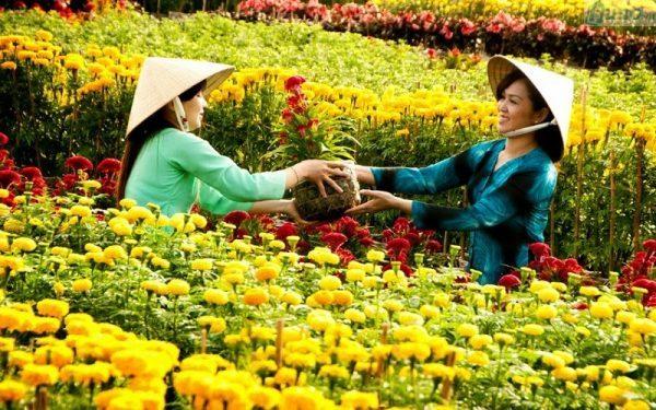 Các loài hoa mang lại may mắn, tài lộc nên chưng vào dịp Tết