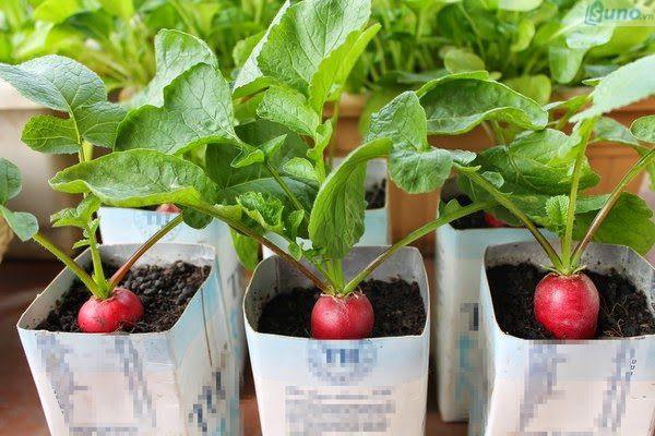 Nhu cầu sử dụng hạt giống ngày càng tăng cao