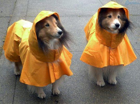 Kinh doanh áo mưa thú cưng