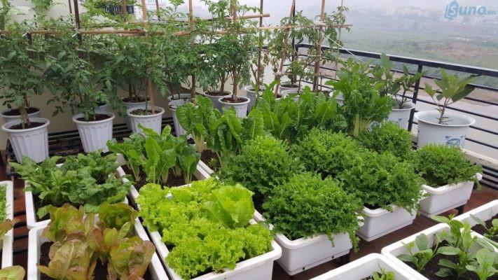Hạt giống hoa, cây cảnh, rau sạch đang là mặt hàng kinh doanh online khá tiềm năng và hiệu quả trên thị trường